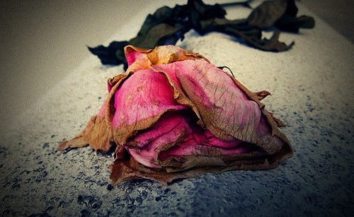 old dried rose rekindle your marriage rekindle love middle class dad