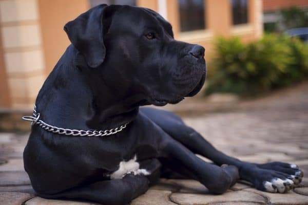 how to protect your home from invasion large black dog sitting on a patio Middle Class Dad
