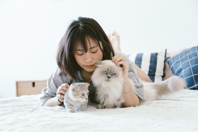 9 Low Maintenance Pets That Like to Cuddle